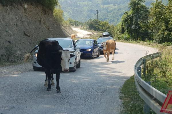 Bośniackie drogi i bezdroża