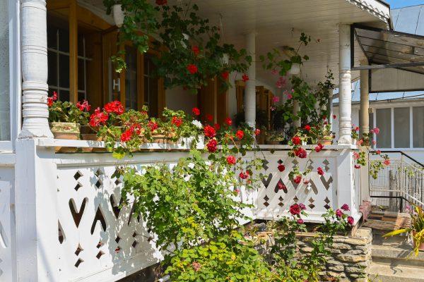Agapia – miłość tonąca w kwiatach